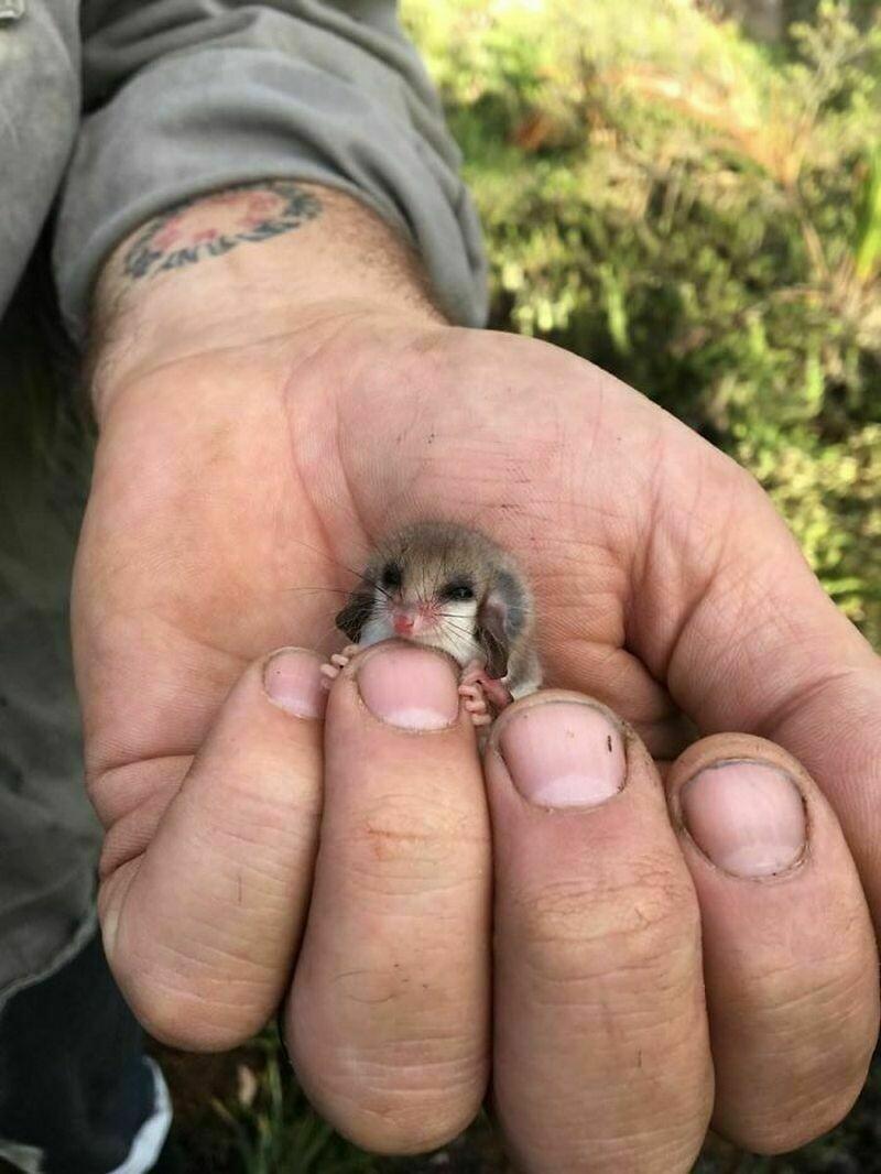 16 фото животных, которые поместятся на одном пальце: почему они кажутся такими милыми