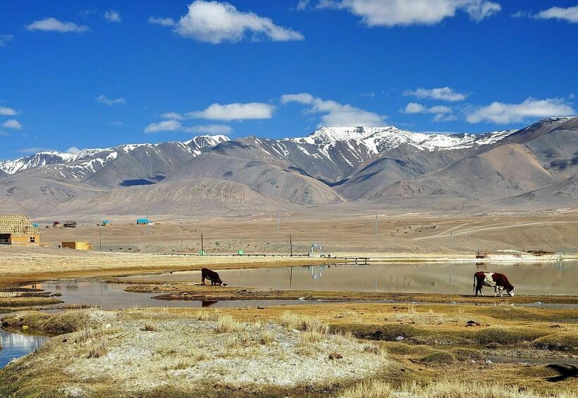 Люди в селе занимаются скотоводством. Фото: smorodina.com