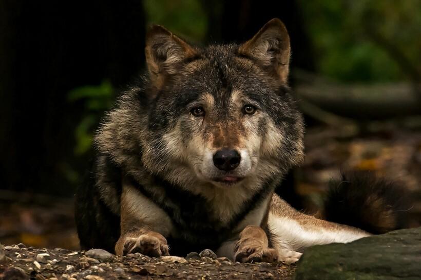 12 самых опасных для человека живых существ России