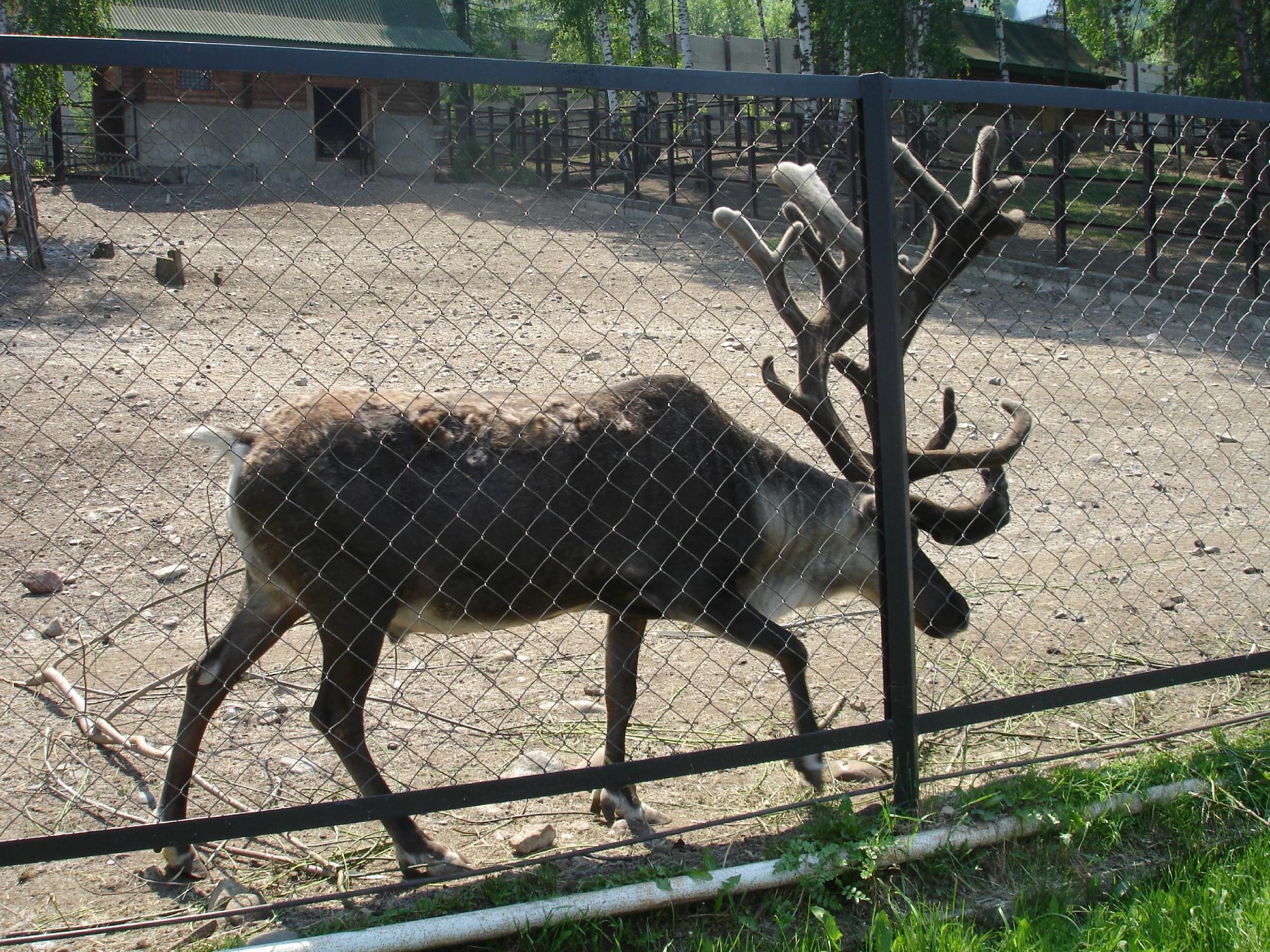 Красноярский парк флоры и фауны Роев ручей