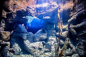 Национальный аквариум Мальты