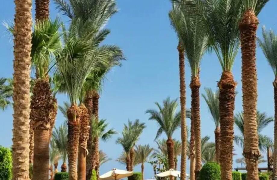 Правила въезда в Египет