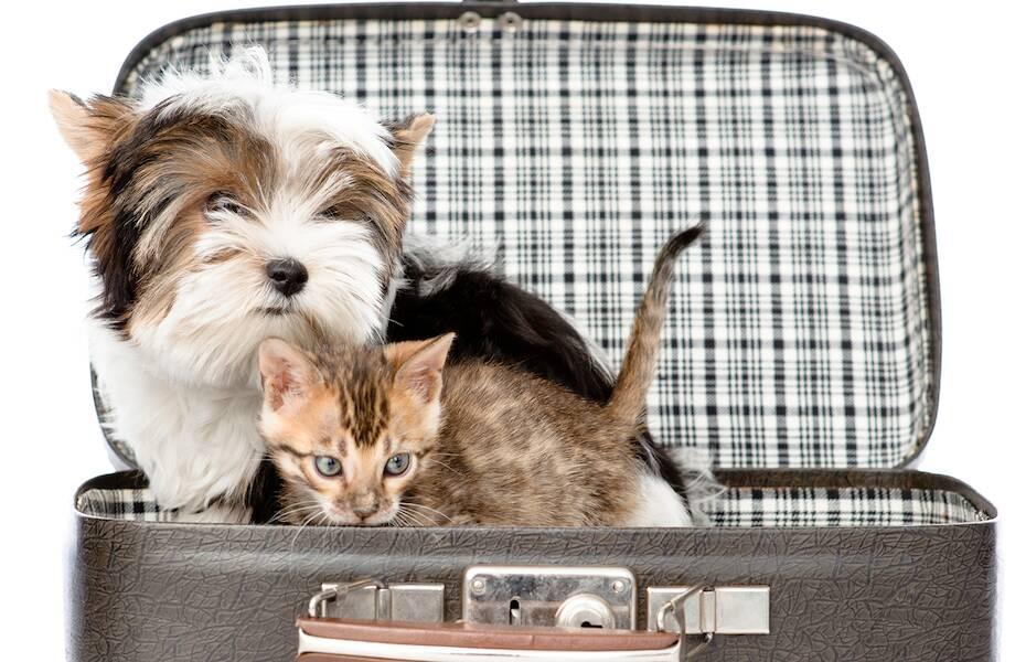 Utair разрешил перевозить животных на пассажирских креслах