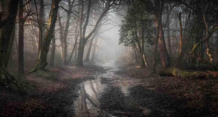 Фото дня: лес в тумане