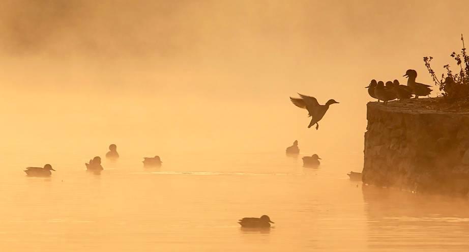 Фото дня: утки на озере в Непале