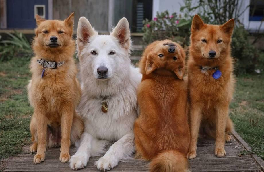 Даже модели так не извернутся: пес, который уж очень странно позирует на камеру