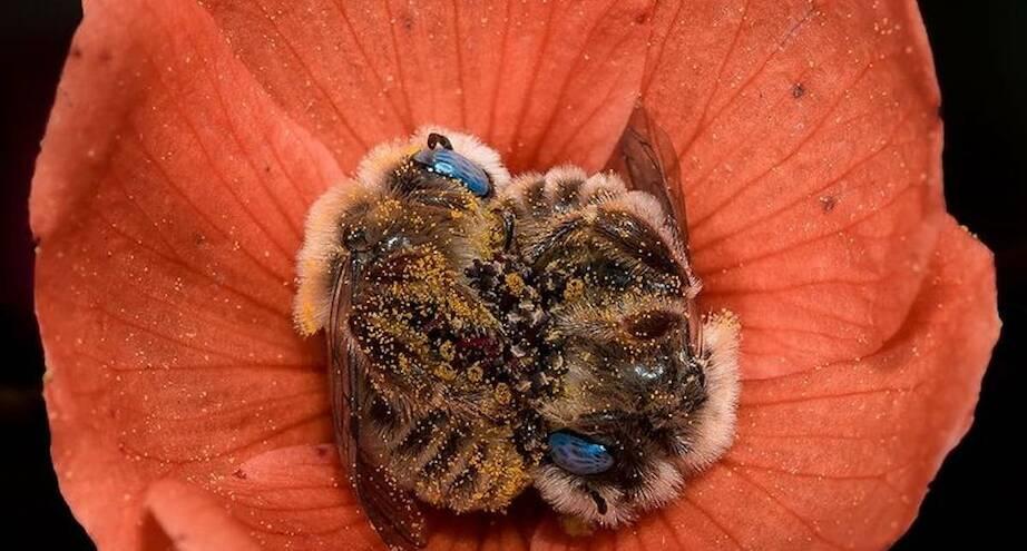 Фото дня: пчелиный сон
