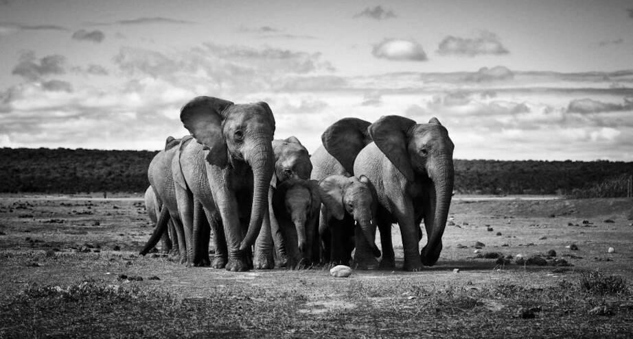 Фото дня: семья слонов на прогулке