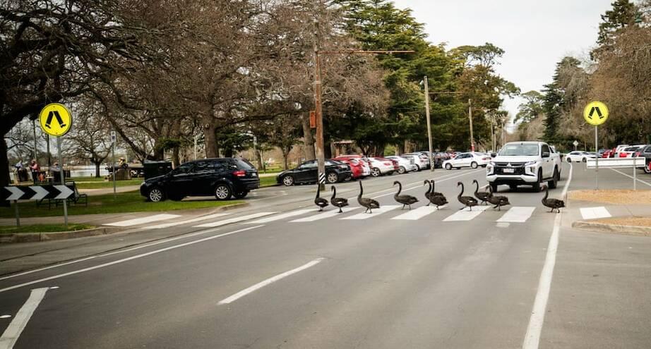 Фото дня: неожиданные пешеходы